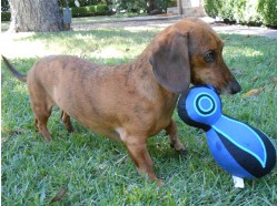 Sprocket  - Quirky birds for eco-loving dogs